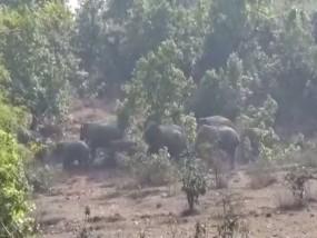 जंगली हाथियों से बचाने नवाचार, बाघ की दहाड़, मधुमक्खी की भिनभिनाहट की आवाज बनी सहारा