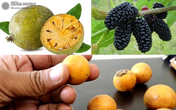 गर्मी के मौसम में इन तीन फलों का सेवन करने से कभी नहीं होंगे बीमार