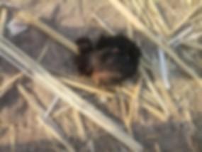शिशु का सिर मिला , धड़ की तलाश में जुटी पुलिस