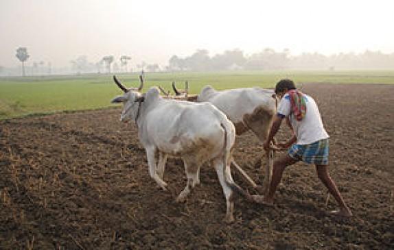 फसल बीमा के लाभ से वंचित किसान , 8 प्रतिशत को ही लाभ