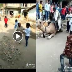 FAKE NEWS:अब तो जानवरों को भी कांग्रेस रास नहीं आती! जानें क्या है वायरल वीडियो की सच्चाई