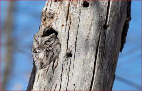 वायरल तस्वीर, इस पेड़ की हकीकत बनी दुनिया भर में चर्चा का कारण