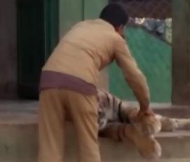 इंसान और बाघ की दोस्ती की मिसाल, वीडियो सोशल मीडिया पर हो वायरल