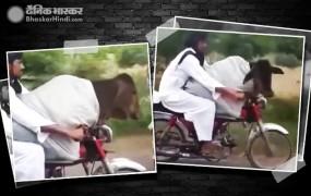 पाकिस्तान का ये शख्स गाय को बैठाकर कर रहा है बाइक राइड
