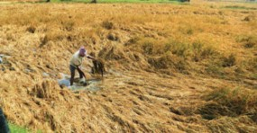 केले की फसल नुकसान के लिए 15 करोड़ 82 लाख, बारिश शुरु होने के बाद भी चारा छावनी में उपलब्ध रहेंगी सेवाएं