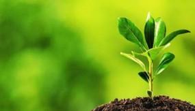 33 फीसदी वन क्षेत्र के लिए टीपी प्लान तैयार करेंगे कलेक्टर, इस मॉनसून 33 करोड़ पौधा रोपण लक्ष्य