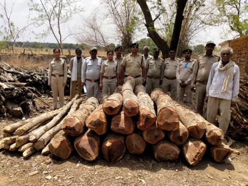 जंगल में अवैध कटाई - जब्ती करने गए वन अमले को आरोपियों ने घेरा , सूझबूझ से बच पाए