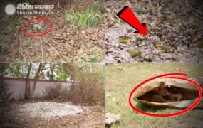 बिहारः मुजफ्फरपुर में SKMCH अस्पताल के पीछे मिले मानव कंकाल, डीएम ने मांगी रिपोर्ट