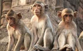 फार्म हाउस मालिक ने बंदरों के पीने के पानी में मिलाया जहर - 7 की मौत