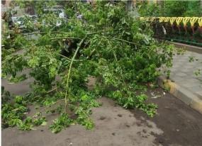 मुंबई में चक्रवात तूफान का असर: तेज हवाओं से गिरे पेड़, कल सुबह गुजरात पहुंचेगा तूफान