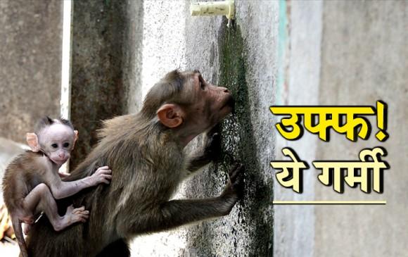 दिल्ली 48, चुरू 50 पार: तस्वीरों में देखें भीषण गर्मी का कहर