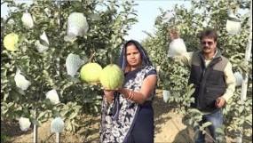 Success : नागपुर से इंजीनियरिंग करने वाला किसान ऑनलाइन बेच रहा फल, घड़ी भर की फुर्सत नहीं