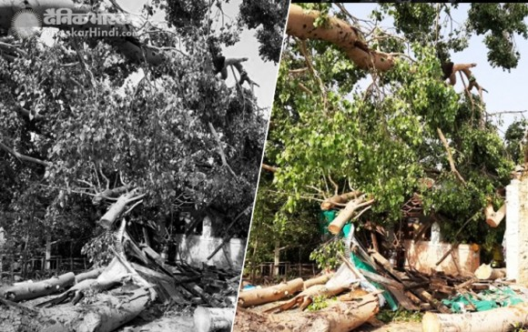 विदर्भ में तूफानी बारिश :आंधी-तूफान से पेड़ धराशायी, 7 बच्चे हुए घायल, 3 गंभीर