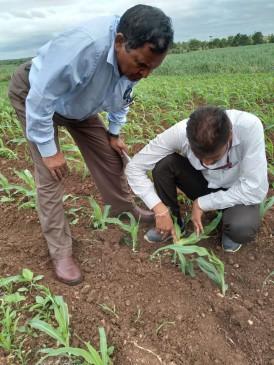 महज 160 रुपए में एक एकड़ फसल होगी सुरक्षित , सीएम ने अनुदान पर उपलब्ध कराया कीटनाशक