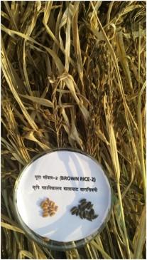 बालाघाट का चिन्नौर चावल शीघ्र ही दस्तक देगा दुनिया के बाजार में