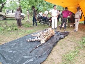 बांधवगढ़ पार्क में फिर एक नर शावक की मौत, तीन दिन में हो चुकी 3 मौत