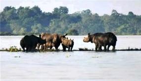 काजीरंगा नेशनल पार्क का 90 फीसदी हिस्सा पानी में डूबा, बड़ी संख्या में जानवरों की मौत