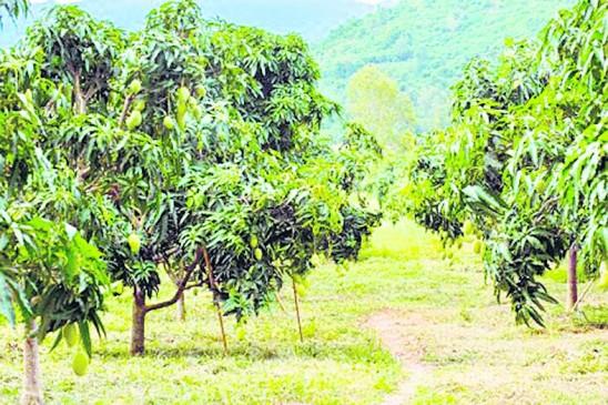 फलोत्पादन में बढ़ा किसानों का रूझान