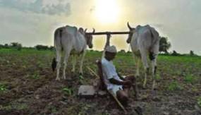 किसानों को डेढ़ माह बाद भी नहीं मिली गेहू़ं के बोनस की राशि - बकाया हैं 36 करोड़