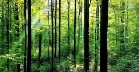 सतना स्मार्ट सिटी में जापानी तकनीक से जंगल उगाने की पहल, प्रदेश का दूसरा नवाचार