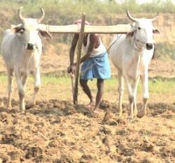 मानसून की बेरूखी से किसान परेशान, 20 से 25% फसल हो सकती है खराब