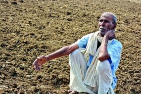 धान की फसल हुई बर्बाद, दोबारा बुआई का संकट