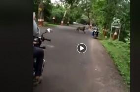 Fake News: क्या मुंबई की सड़कों पर खुलेआम घूम रहा शेर ?