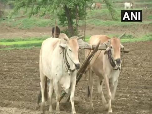 'पूर्व विदर्भ में कम वर्षा से धान की फसल को पहुंचा नुकसान, किसान परेशान