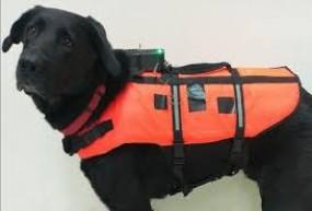 आविष्कार, अब आई कुत्तों को कंट्रोल करने वाली जैकेट