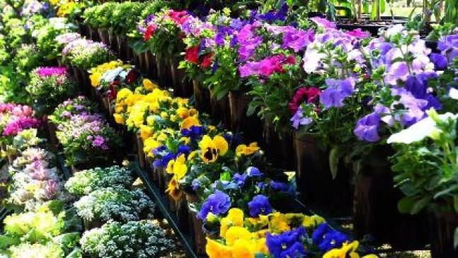 अब घर में खाली जगह पर बिना मिट्टी के उगा सकेंगे सभी मौसम की सब्जियां