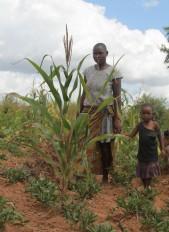 कपास, मक्का को छोड़ बाकी फसलों की बुवाई की रफ्तार सुस्त