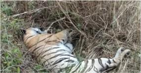 चंद्रपुर में बाघिन सहित दो शावकों की मौत, चीतल भी था मृत, रिटायर्ड अधिकारी के घर से मिली तेंदुए की खाल