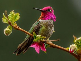 वीडियो: हर सेकेंड में कैसे बदलता है अपना रंग ये खूबसूरत पक्षी