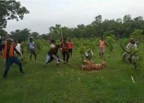 UP: दिल दहला देने वाली घटना, सैकड़ों लोगों ने पीट-पीटकर बाघ को मार डाला