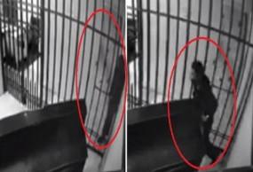 वायरल वीडियो: दुबलेपन का उठाया फायदा, सलाखों से भागा चोर