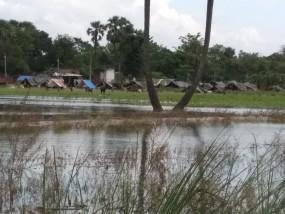 बिहार में बाढ़ के कारण अब तक 133 लोगों की मौत, धीरे-धीरे घट रहा जलस्तर