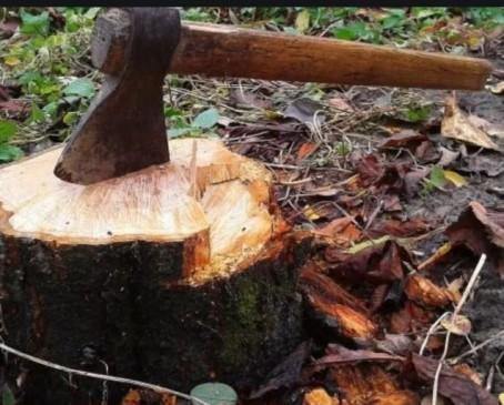 नागपुर के 30 प्रतिशत पेड़ों की कटाई, 19 साल में घटा ग्रीन कवर