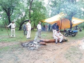 रातभर शावक की चिता को निहारती रही बाघिन, मौत पर सीएम कमलनाथ ने जताई चिंता