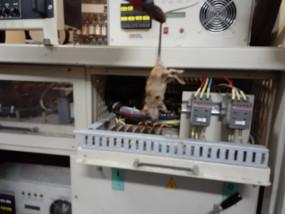 संपर्क क्रांति में पावर कार के इलेक्ट्रिक सर्किट में चूहा चिपका, लाइट-पंखे बंद