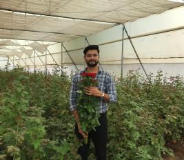 फूलों से महकी जिंदगी : आधा एकड़ में सालाना साढ़े तीन लाख की कमाई - मॉडर्न खेती