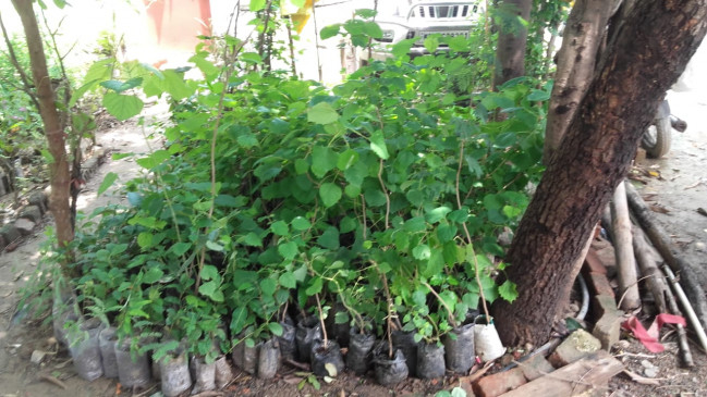 खेल-खेल में रोपे दो पौधे, जो अब अभियान बन गया- कैमोरी के युवकों का प्रसंशीय प्रयास
