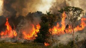 ब्राजील के राष्ट्रपति ने अमेजन के जंगलों में लगी आग से निपटने के लिए भेजी सेना
