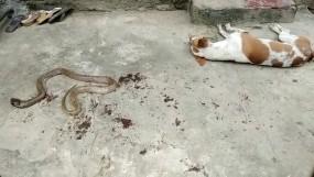 कुत्ते ने निभायी वफादारी, अपनी जान देकर बचाई मालिक की जान