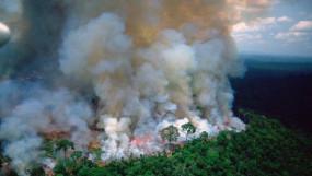 अमेजन फॉरेस्ट में आग लगने से परेशान बॉलीवुड सेलेब्स, मीडिया से की ये गुजारिश