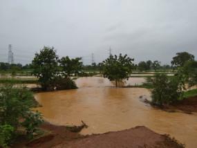 चंद्रपुर में पानी में डूबी किसानों की 100 हेक्टेयर धान की फसल