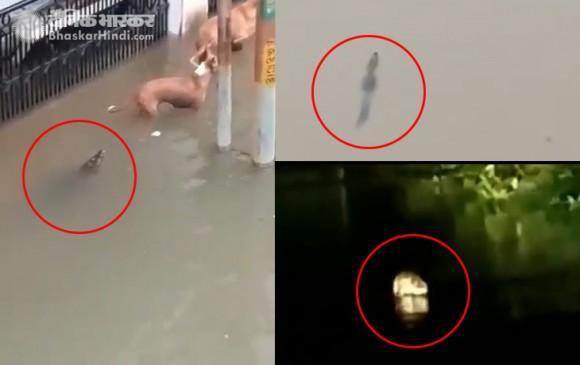गुजरात: वडोदरा की सड़कों पर घूम रहे मगरमच्छ, भारी बारिश से बाढ़ जैसी स्थिति