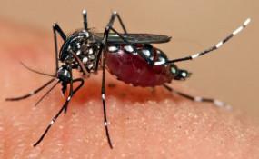 सीएम हाउस, सेंट्रल मॉल सहित कई स्कूल परिसरों में डेंगू का लार्वा