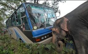 Fake News: क्या हाथी ने खाई में गिरने से बस को बचाया ?