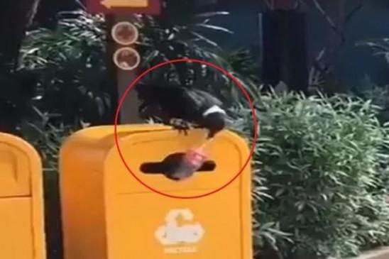 कौआ बना सफाई कर्मचारी, सोशल मीडिया पर वायरल हो रहा वीडियो