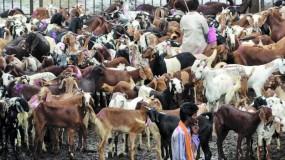 बकरीद के दौरान घर में कुर्बानी पर लगाई रोक बरकरार, बकरा चोरी रोकने डिजिटल तकनीक का सहारा ले रही पुलिस